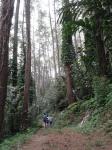 Melewati hutan I.R. Juanda