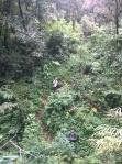14. Mendaki di antara semak. Kelihat keecciiillll