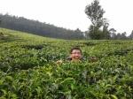 4. Memasuki kebun teh Sukawana