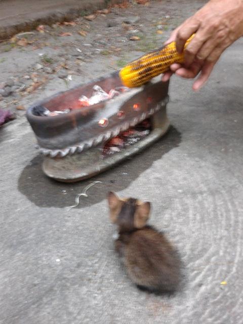 Impian seekor anak kucing; ngarep jagung bakar anget.